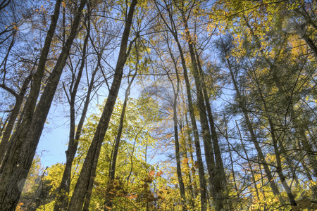 Autumn forest stock photo, Beautiful autumn forest scene of the tree tops and blue sky. by Robert Ranson