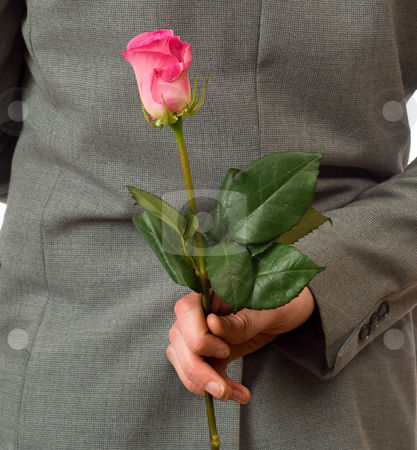 Surprise Rose stock photo, Closeup view of a man holding a single rose behind his back by Richard Nelson