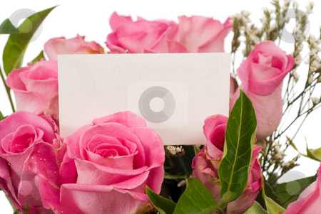 Roses and Message Card stock photo, Closeup view of a bouquet of roses and your text on a card by Richard Nelson