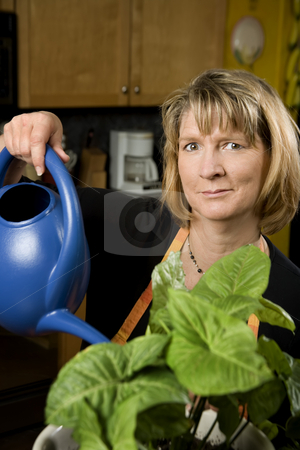 Woman in Kitchen Watering a Plant stock photo, Woman in Kitchen Watering Wearing Apron a Plant by Scott Griessel