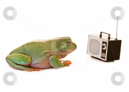 tv frog deutschland