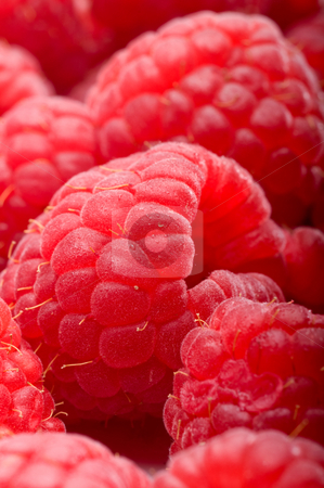 Macro of fresh red rasperries stock photo, Shallow focus macro of fresh red rasperries by Vince Clements