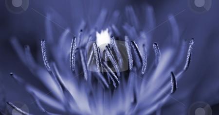 Inside A Flower stock photo, Macro shot of the inside of a purple flower. by Henrik Lehnerer