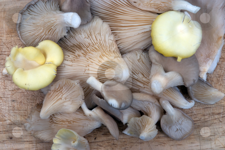 Assorted mushrooms stock photo, A group of assorted mushrooms on a chopping board background by Paul Phillips