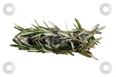 Rosemary stock photo, Fresh green herb rosemary on white background. by Henrik Lehnerer