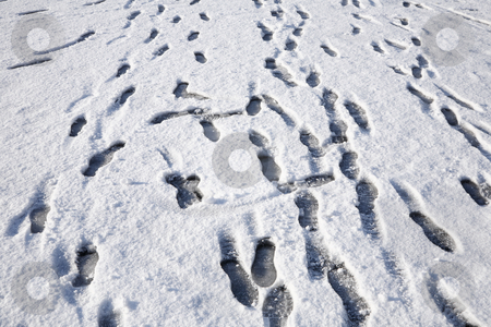 Lots of footprints in the snow. stock photo, Lots of footprints in the snow. by Stephen Rees