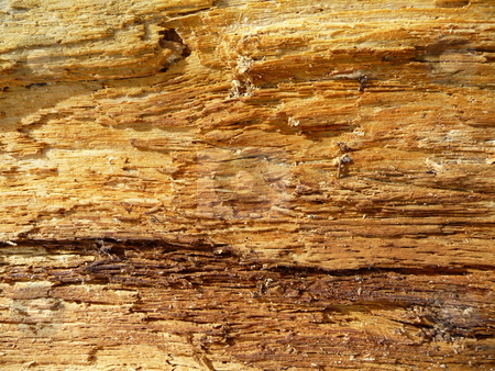 Fallen log interior texture stock photo,  by J.G. Byers
