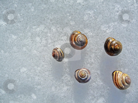 Snail shells on ice stock photo,  by J.G. Byers
