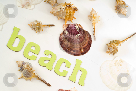 Beach Concept stock photo, Assorted seashells along with the text beach, shot against a white background by Richard Nelson