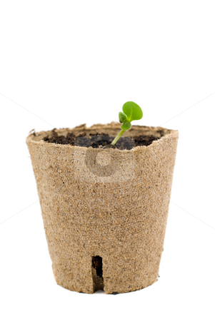 New Life stock photo, New plant growth coming out of a environmental container, isolated against a white background by Richard Nelson