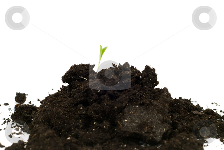 New Beginning Concept stock photo, Concept image of a new beginning with some new plant growth coming out of a mound of soil, isolated against a white background by Richard Nelson