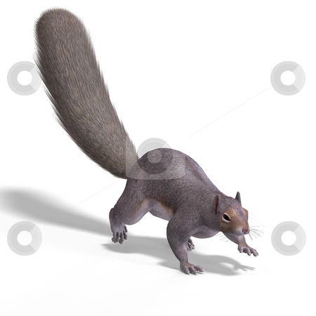 Squirrel 3D Render stock photo, Rendering of a cute Squirrel with Clipping Path by Ralf Kraft