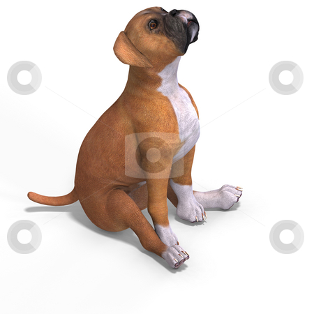 Cute puppy boxer stock photo, Very cute young dog over white with Clipping Path by Ralf Kraft