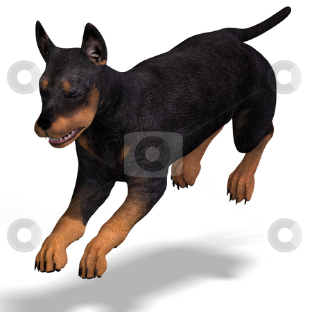 Cute puppy doberman stock photo, Very cute young dog over white with Clipping Path by Ralf Kraft