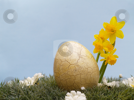 Easter egg stock photo, Easter egg with drarf daffodils on artificial grass and blossoms, light blue background by Torsten Lorenz