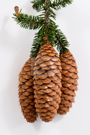 Pine Cones stock photo, Three pine cones with white background by Stephen Bonk