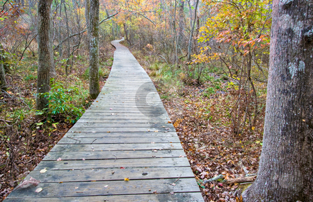 Wooden walkway in the forest stock photo, A wooden walkway on part of a trail in the woods by Stephen Bonk
