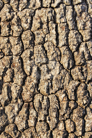 Tree Bark 2 stock photo, Tree bark showing details, textures, and patterns by Stephen Bonk