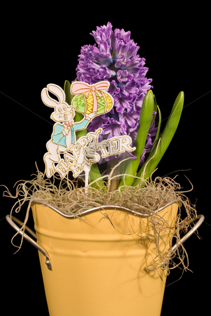 Hyacinth and Happy Easter Sign stock photo, A Purple Hyacinth flower and Happy Easter sign isolated on a black background by Stephen Bonk