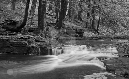 Little Falls in Black and White stock photo, A stream with small waterfalls in a wooded area in black and white by Stephen Bonk