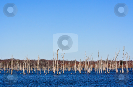 Dead Trees stock photo, A reservoir filled with dead trees by Stephen Bonk