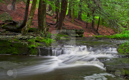 Little Falls stock photo, A stream with small waterfalls in a wooded area by Stephen Bonk