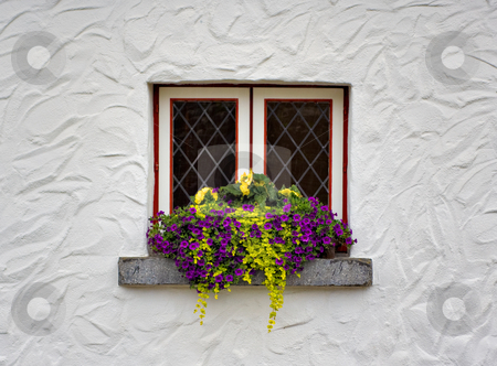 Window and Flowers stock photo, Flowers on the window sill of a white building by Stephen Bonk