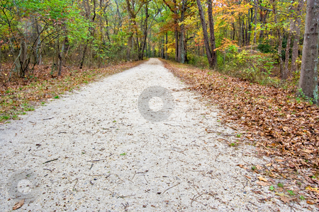 Path in the Woods stock photo, A wide path or road in the woods. It is late autumn and the leaves have turned colors and are falling off the trees. by Stephen Bonk