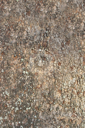 Tree Bark 3 stock photo, Tree bark showing details, textures, and patterns by Stephen Bonk