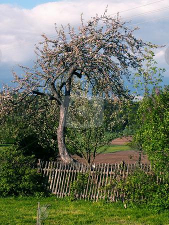 Tree stock photo,  by Sarka