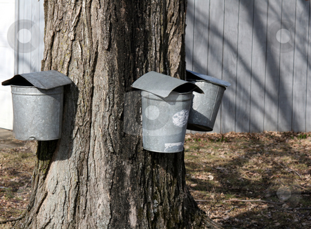 Maple Sugaring stock photo,  by Tom and Beth Pulsipher