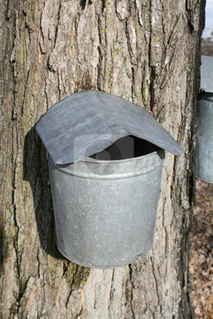 Maple Sugaring - Single Bucket stock photo,  by Tom and Beth Pulsipher