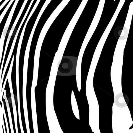 Zebra Stripes stock photo, Zebra stripes pattern in black and white that works great as a background. by Todd Arena