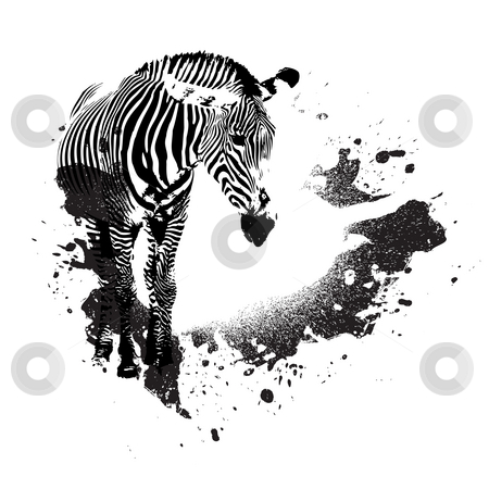 Grungy Zebra stock photo, Zebra in black and white with splatted paint accents by Todd Arena