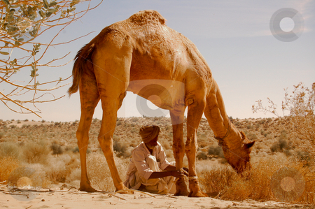 Take a break in the desert stock photo, Tiding the camels during the break has the purpose to keep the animal in the surrounding of the camp, by Piero Biondo