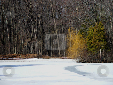 Colorful Trees Stick Out in Winter stock photo, Colorful trees stick out in this winter scene. Forest area beside a frozen waterway in Northwest Ohio by Dazz Lee Photography