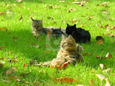 Cats stock photo, Cats under sunshine by Yusuf Onaldi