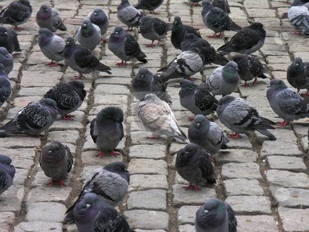 Lonely bird stock photo, Doves hanging around by Yusuf Onaldi