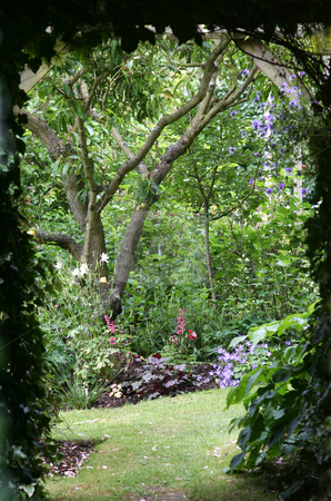 Into the Garden stock photo, Shady path leading into a secret garden full of flowers and a almond tree by Helen Shorey