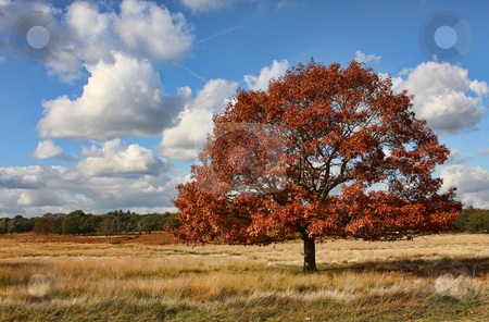 Single tree in a field on a lovely autumnal day stock photo, Single Tree standing in a field on a lovely Autumnal day by Mark Allchin