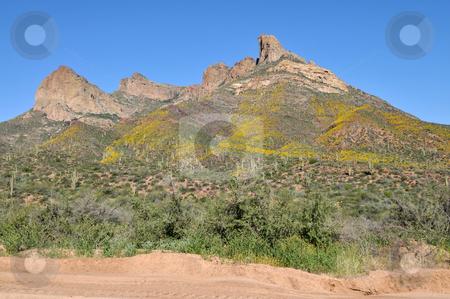 Desert stock photo, Desert hills covered in saguaro cactus and spring wildflowers, Apache Trail, northeast of Phoenix, Arizona by Harris Shiffman