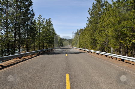 Road stock photo, Empty road through the evergreens, Lost Creek Lake, Oregon by Harris Shiffman