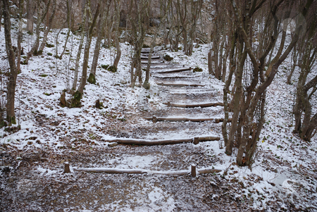 Staircase in wood stock photo, Staircase made of trunks in a forest in winter. by Ivan Paunovic