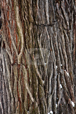 Tree bark detail stock photo, The detail of bark, the outer layer of a tree trunk by Paul Hakimata