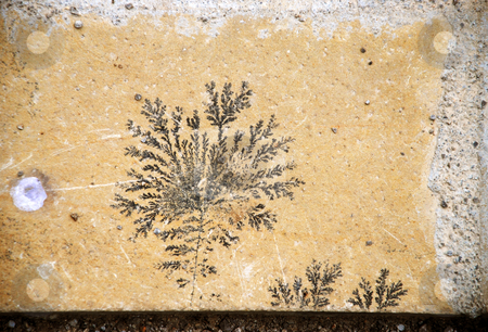 Fossil designed stone stock photo, Botanical black fossil design over yellow stone by Julija Sapic
