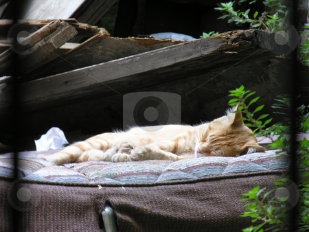 Sleepy cat stock photo,  by Yusuf Onaldi