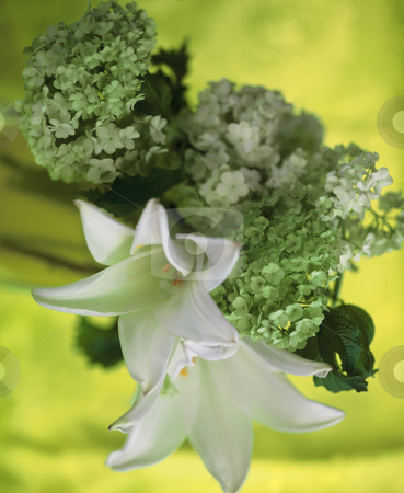 Ladies Dinner stock photo, Green Snowball and White Lillies composed with a matching green Background to an elegant Picture. 3543x4316 Pixel, 43,7 MB, 300 dpi by Ute Wingenfeld