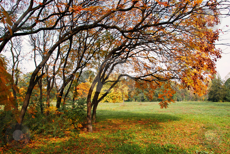 Autumn landscape stock photo, Autumn trees yellow leaves in park over green grass by Julija Sapic