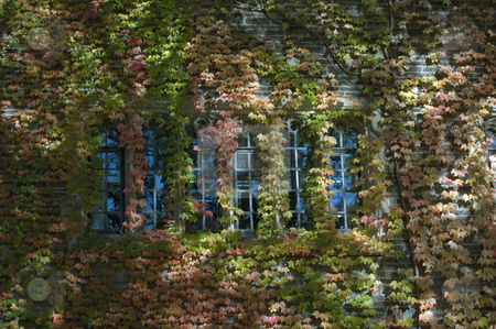 Ivy stock photo, Old style building in street of Toronto by Pavel Cheiko