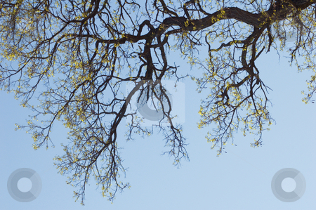Tree stock photo, Tree against blue sky and clouds by Pavel Cheiko